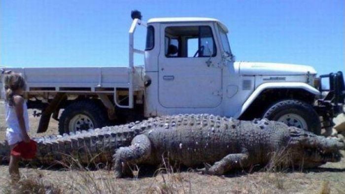 Now that's a gator